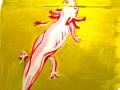 Axolotl, sketches 3