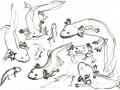 Axolotl, sketche