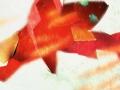 catfishfish1