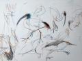 Ibis, pelican, flamingo and Heron