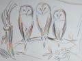 church-owls
